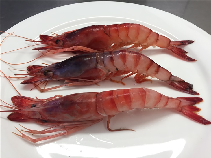 Leggi blog | Purple Shrimp